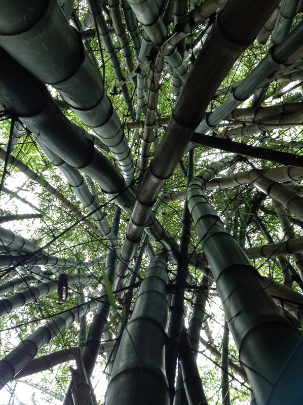 Swirling bamboo thicket